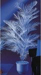 Kentia palm 1 subject white