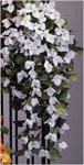 Bougainvillea trailer A